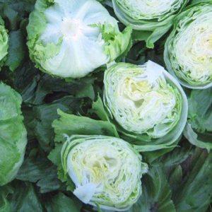 pr-agro-eduardo-f1-salat-ajsberg-enza-zaden2