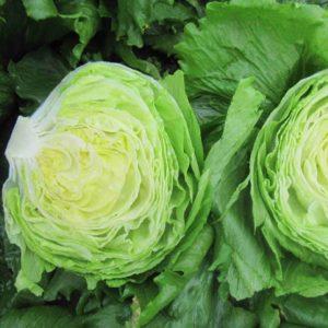 pr-agro-glendana-f1-salat-ajsberg-enza-zaden