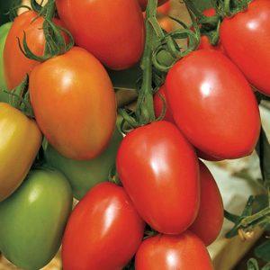 pr-agro-granadero-f1-tomat-enza-zaden