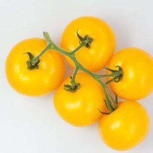 pr-agro-gualdino-f1-tomat-enza-zaden