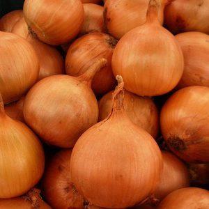 pr-agro-iroko-f1-luk-enza-zaden