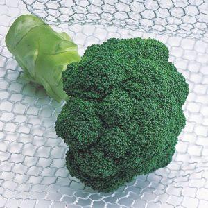 pr-agro-kvinta-f1-brokkoli-enza-zaden
