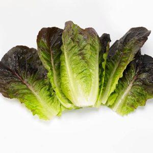 pr-agro-munred-f1-salat-romano-enza-zaden