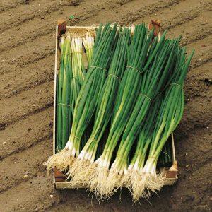 pr-agro-parade-f1-luk-na-zelen-bejo-10-000