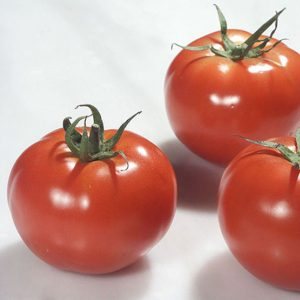pr-agro-ralli-f1-tomat-enza-zaden