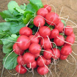 pr-agro-roleks-f1-redis-bejo-2-50-2-75