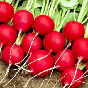pr-agro-selesta-f1-redis-enza-zaden