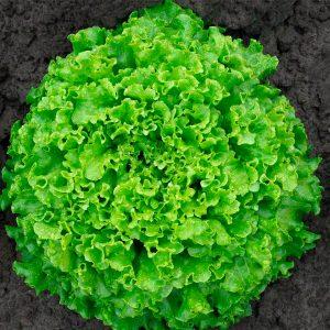 abordazh-f1-salat-gavrish