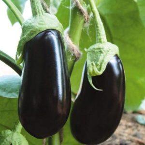 pr-agro-almalik-f1-baklazhan-gavrish