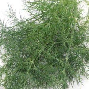 pr-agro-almaz-f1-ukrop-gavrish