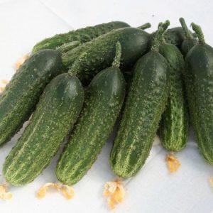 pr-agro-avans-f1-ogurecz-gavrish