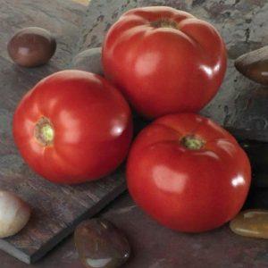 pr-agro-bella-rosa-f1-tomat-sakata