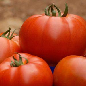 pr-agro-belle-f1-tomat-enza-zaden