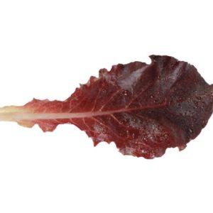 pr-agro-diablotin-f1-salat-listovoj-enza-zaden