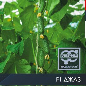 pr-agro-dzhaz-f1-ogurecz-gavrish