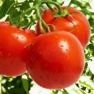 pr-agro-dzhempakt-f1-tomat-sakata