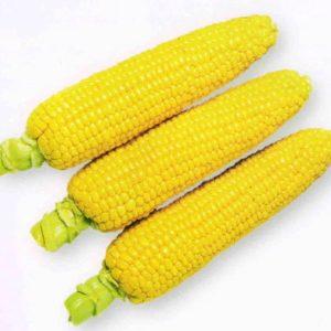 pr-agro-honi-bentam-f1-kukuruza-sakata
