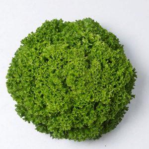 pr-agro-ilema-f1-salat-lollo-bionda-enza-zaden
