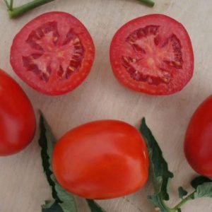 pr-agro-indio-f1-tomat-sakata