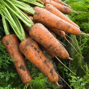 pr-agro-kordoba-f1-morkov-bejo
