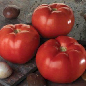 pr-agro-linda-f1-tomat-sakata