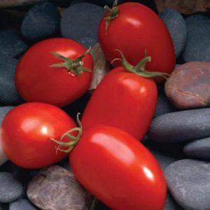 pr-agro-mariana-f1-tomat-sakata