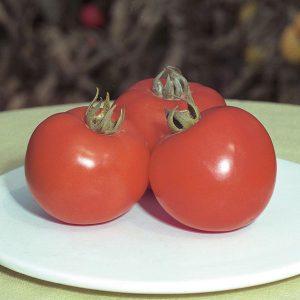 pr-agro-polfast-f1-tomat-bejo