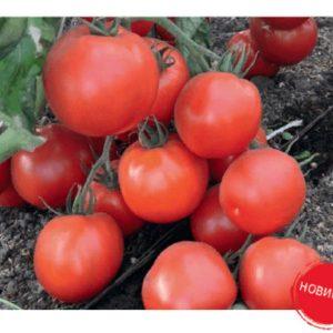 pr-agro-premera-f1-tomat-gavrish
