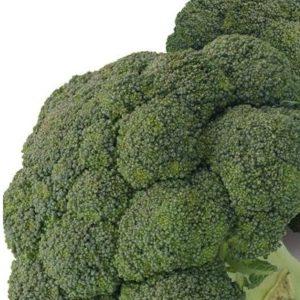 pr-agro-serfing-f1-brokkoli-gavrish