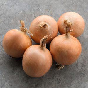 pr-agro-tamara-f1-luk-bejo