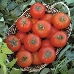 pr-agro-topsport-f1-tomat-bejo