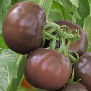 pr-agro-amigo-f1-tomat-grinomika