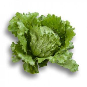 pr-agro-rubett-f1-salat-ajsberg-rajk-czvaan