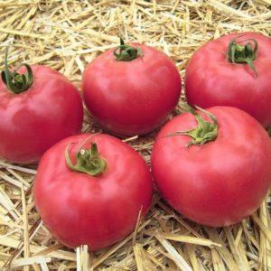 pr-agro-afen-f1-tomat-vilmorin