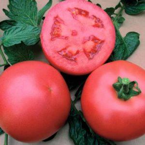 pr-agro-alezi-f1-tomat-vilmorin
