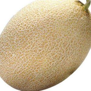 pr-agro-amal-f1-dynya-vilmorin