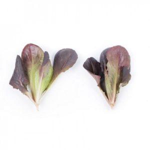 pr-agro-bojd-f1-salat-rajk-czvaan