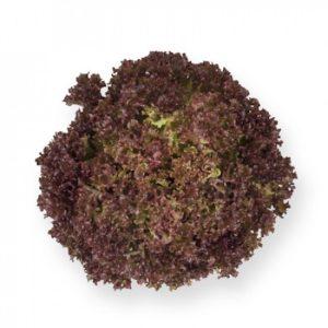 pr-agro-entoni-f1-salat-rajk-czvaan