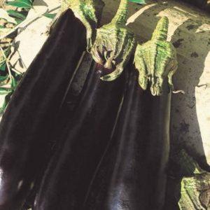 pr-agro-farama-f1-baklazhan-vilmorin