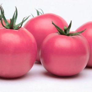 pr-agro-fenda-f1-tomat-vilmorin-250-sht
