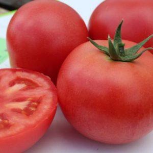 pr-agro-gvadalkvivir-v445-f1-tomat-vilmorin