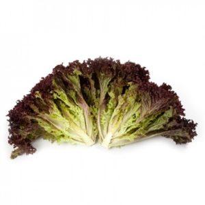 pr-agro-karmezi-f1-salat-rajk-czvaan