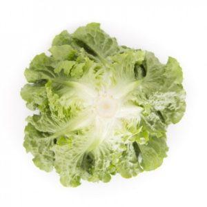 pr-agro-konversh-f1-salat-rajk-czvaan