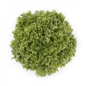 pr-agro-lalik-f1-salat-ajsberg-rajk-czvaan