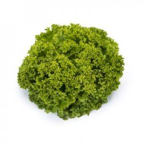 pr-agro-landau-f1-salat-rajk-czvaan