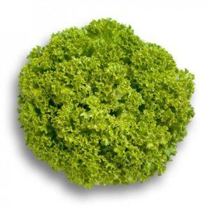 pr-agro-levistro-f1-salat-rajk-czvaan