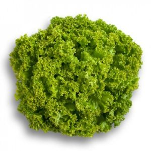 pr-agro-lokarno-r3-f1-salat-rajk-czvaan