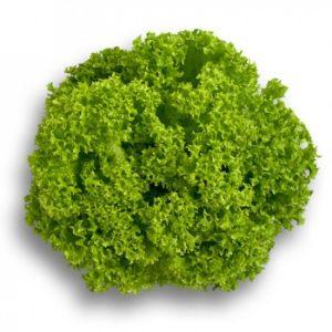 pr-agro-lozano-f1-salat-rajk-czvaan