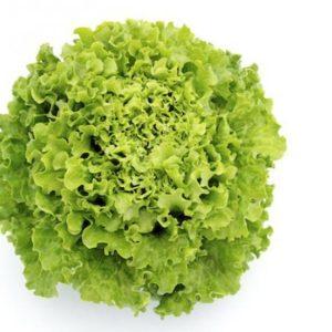 pr-agro-maradon-f1-salat-vilmorin