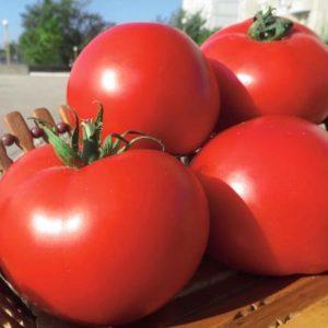 pr-agro-oazis-f1-tomat-vilmorin